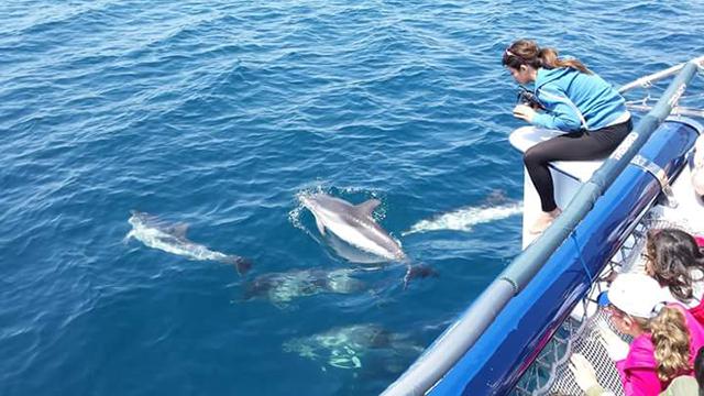 Visita-ai-delfini-di-Taranto